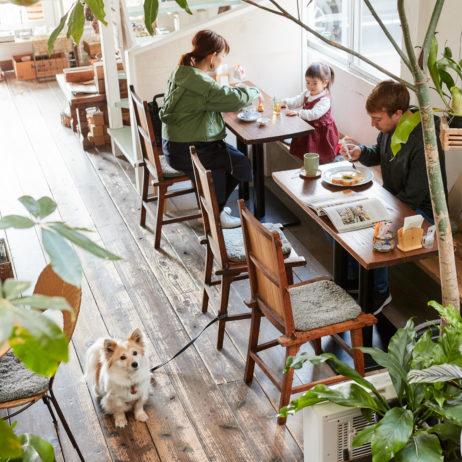 ドッグカフェ.ドッグカフェ神戸.神戸.神戸カフェ.灘区.カフェ.王子公園.